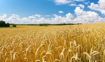 Termény nedvességmérőket aratás előtt is érdemes használni